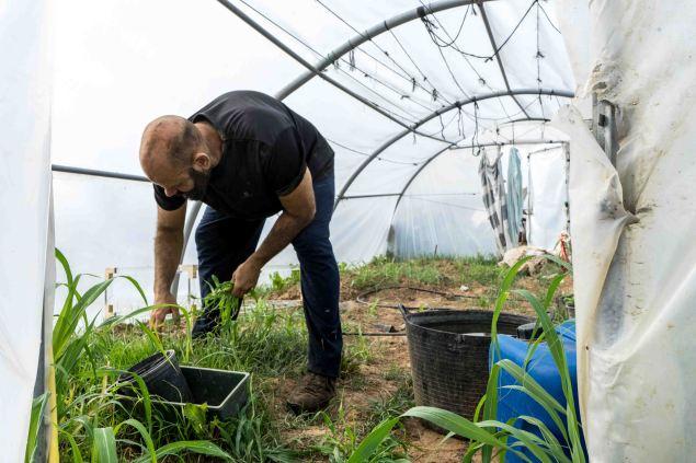 Jorge quita las malas hierbas del invernadero