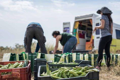 Voluntarias y miembros del grupo Raíces preparan las cestas para el reparto